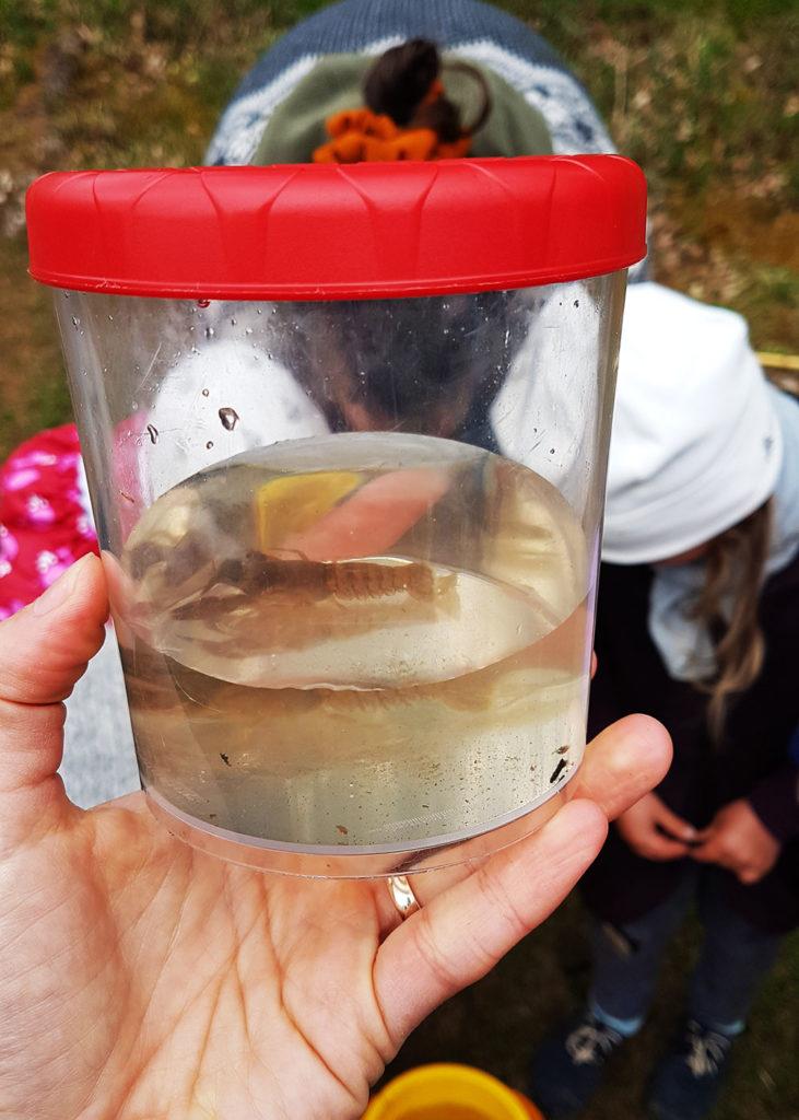 Besuch einer Freilernergemeinschaft auf Bornholm. Flusskrebs