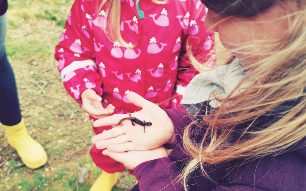 Besuch einer Freilernergemeinschaft auf Bornholm. Salamander in der Hand
